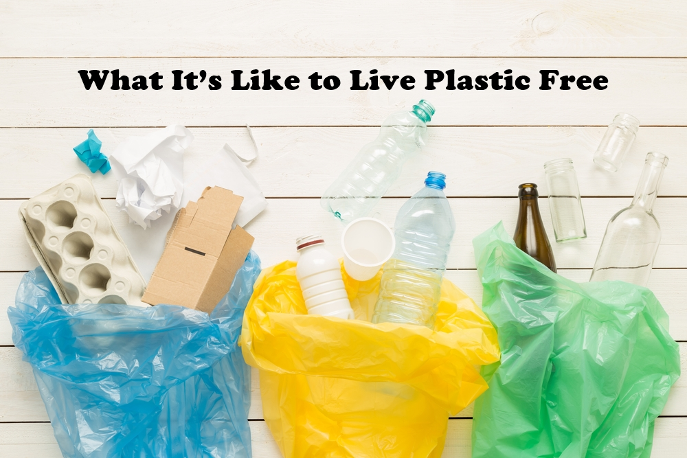 What It's Like to Live Plastic Free featured image by Love Thyself